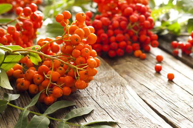 Рябина - очень полезная ягода
