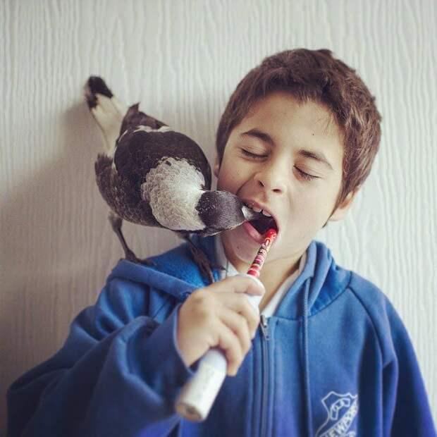 Умная домашняя сорока, которая любит поваляться в постели и помогает детям чистить зубы