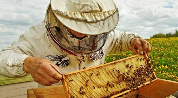 «Ищите не мед, а пчеловода»