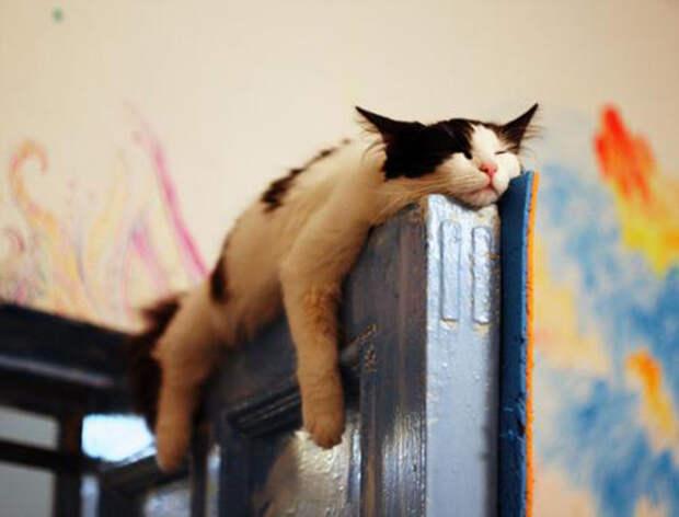 Большая высота не помеха уставшему коту.