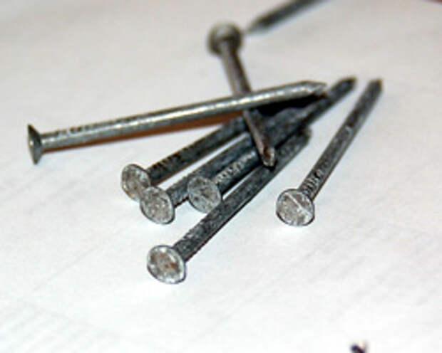 photo of medium head nails