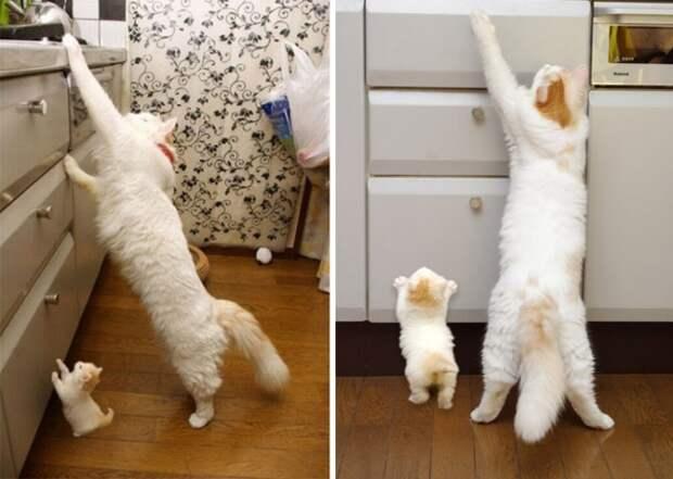 15 котов и их очаровательные мини-копии