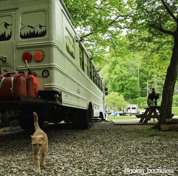 Пара превратила старенький школьный автобус в дом своей мечты