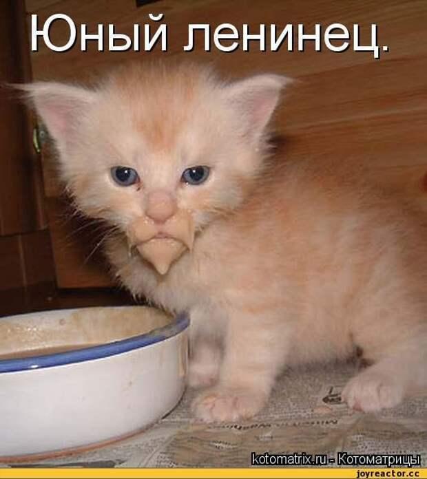 Кошачьи истории — обхохочешься!
