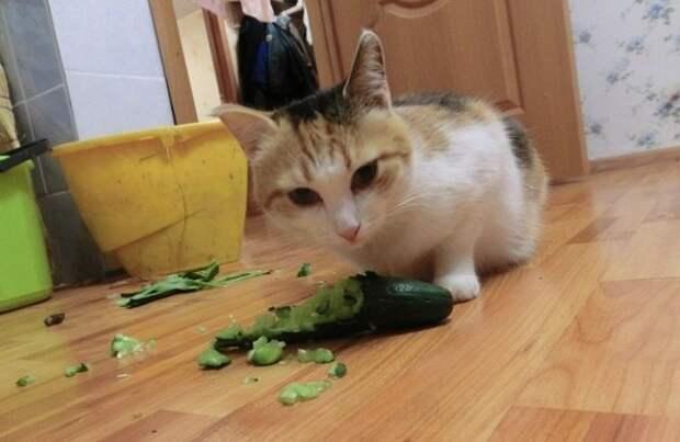 Милые и забавные кошки