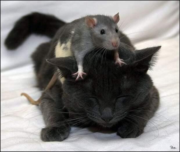 Необычная дружба..