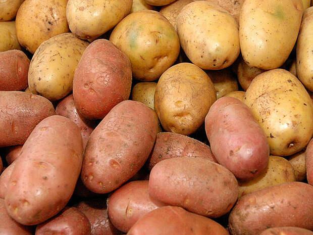 Kartofel_NBu_A07.jpg