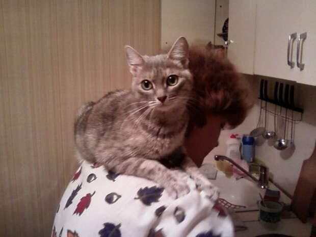 Василиса уже 14 лет в нашей семье...