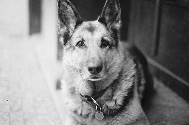 Завещание собаки человеку…