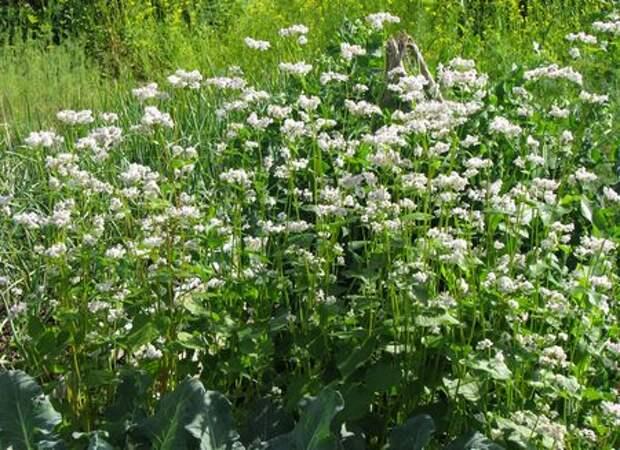 5 растений для отличного компоста