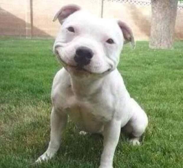 Добрые фото из жизни собак