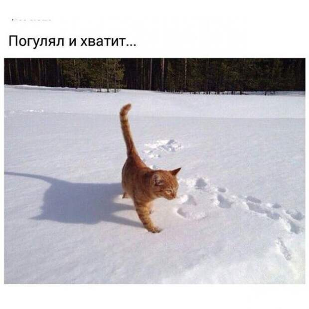 Это Сибирь, детка!
