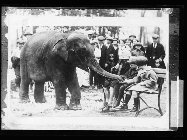 13. Кормление слонов животные, зоопарк