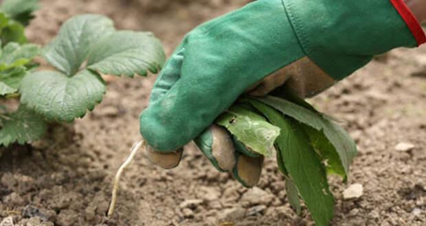 Как подружиться с вредителями огорода и сада?