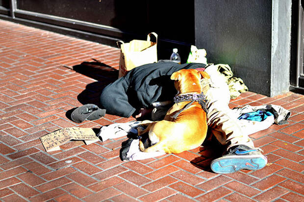 40.  бездомный, любовь, собака