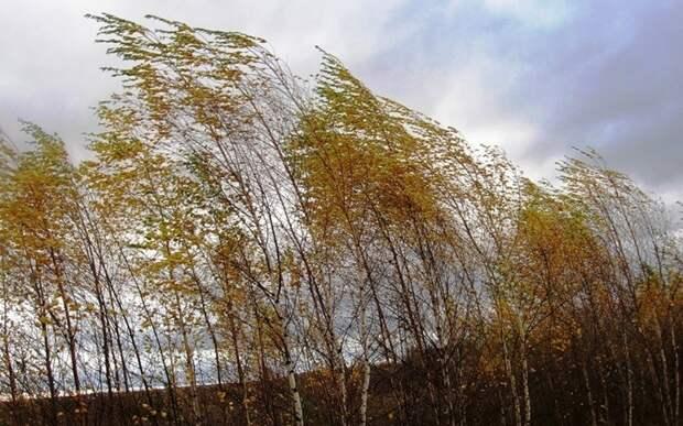 МЧС: на Рязанскую область надвигаются гроза и сильный ветер