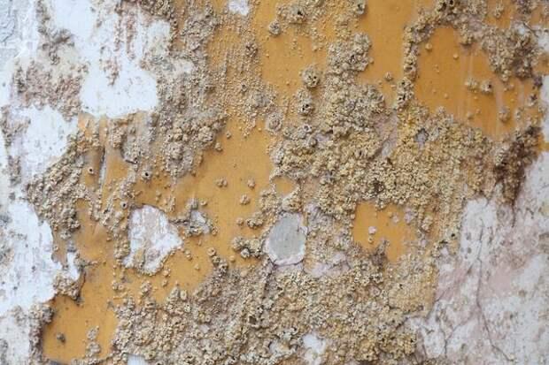 Сырость - среда для развития грибков и плесени