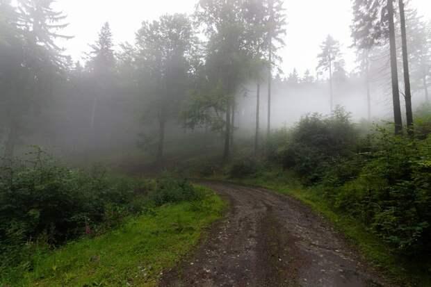 В лесу пропал мальчик