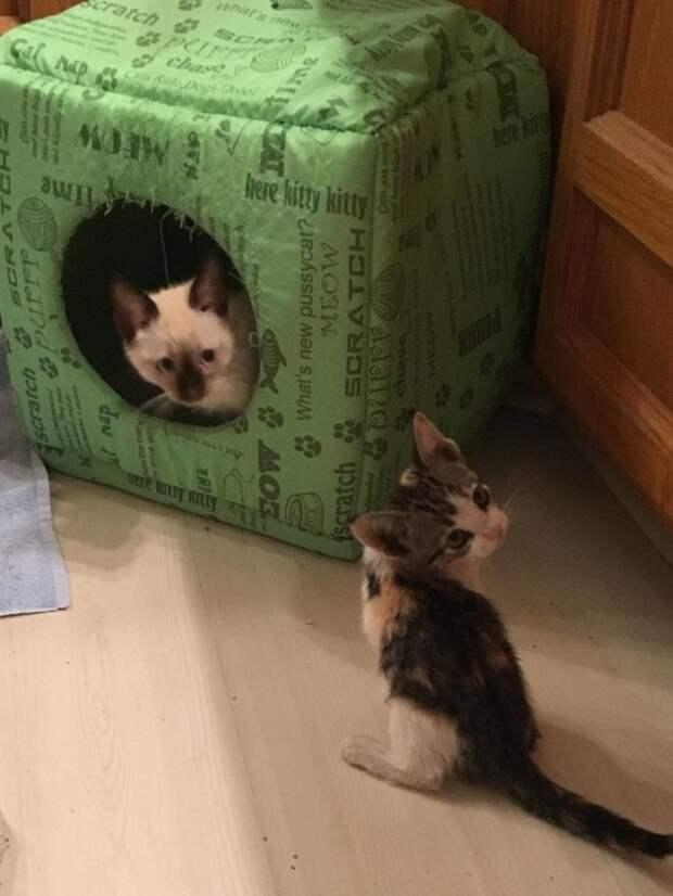 два котенка играют