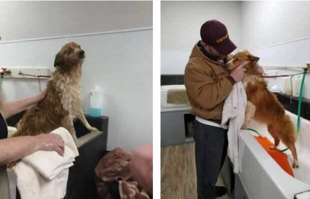 Собаку, которую унес торнадо, нашли через 2 месяца
