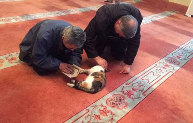 Стамбульский имам устроил в мечети кошачий приют