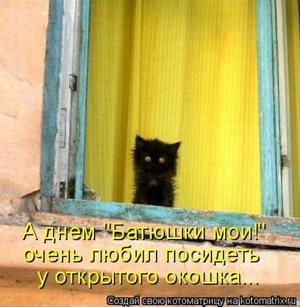Лучшая котоматрица недели (32 фото)