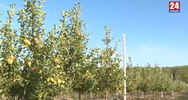 На развитие сельского хозяйства в Белогорском районе выделили 160 млн рублей