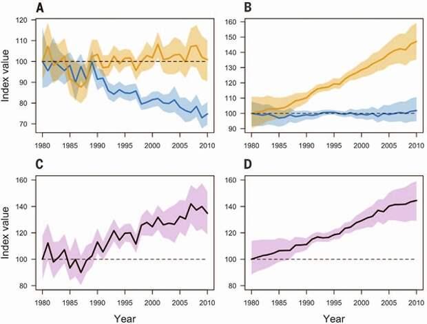 Рис. 6. Влияние климатических условий на тренды численности обычных видов птиц. Мультвивидовые популяционные индексы групп CST+ (оранжевые линии) и CST− (синие линии), объединенные по странам Евросоюза (A) и штатам США (B). Цветными полосамипоказаны 90% доверительные «интервалы». Индекс влияния климата (C — ЕС, D — США) равен частному показателей CST+ и CST−. Значения всех индексов выражены в процентах, за 100% принято значение 1980 года. Горизонтальные пунктирные линии на этом уровне соответствуют отсутствию тренда на рис. A и B, и отсутствию различий между CST+ и CST− группами на рис. C и D. Рисунок из обсуждаемой статьи в Science