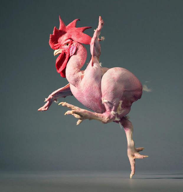 Шедевральные портреты животных в исполнении Тима Флака