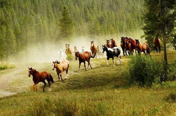 Лошади Исландии в фотографиях животные, лошади, факты, фото