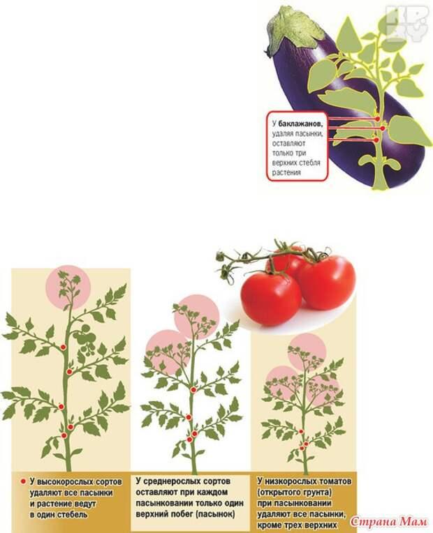 Листва у томатов — удалять или нет? Все о пасынковании овощей