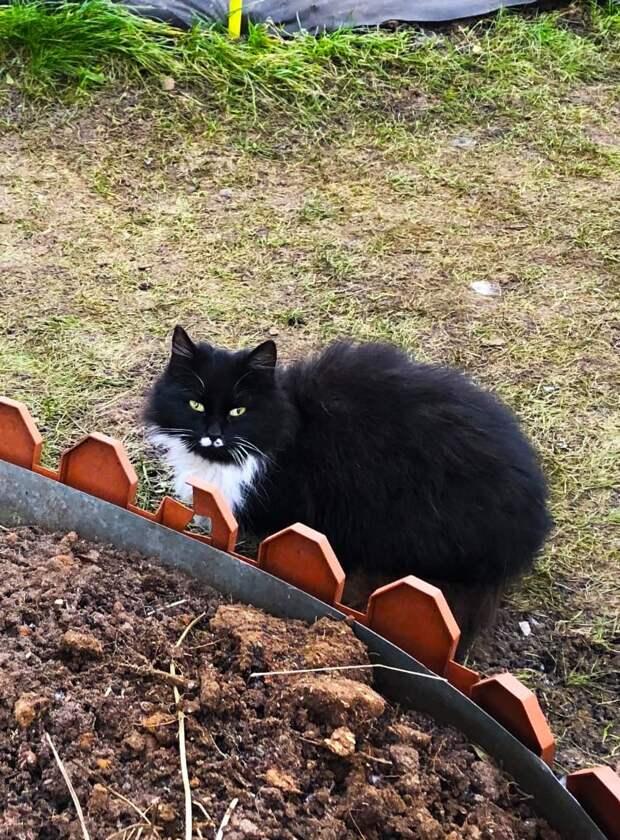 Умоляем, отзовитесь! Через несколько дней садоводство опустеет и они погибнут мучительной смертью...