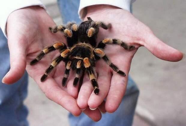 безвредные животные люди бояться до смерти, безвредные животные выглядят страшно, безвредные животные люди бояться как огня