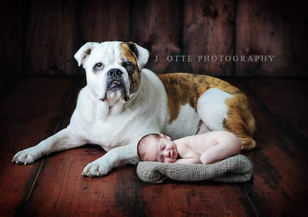 младенцы и собаки первая фотосессия (5)
