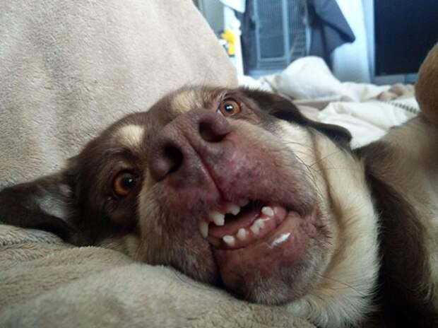 Когда собака счастлива, она может улыбаться кому угодно