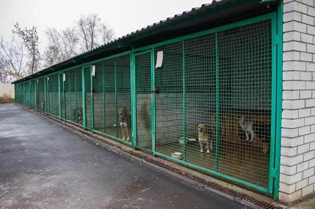 Животные в разрушенном войной Донбассе - друзей не бросают...