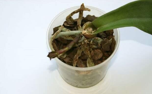 Пересадила орхидею на небольшой блок… Такого пышного цветения я не видела!