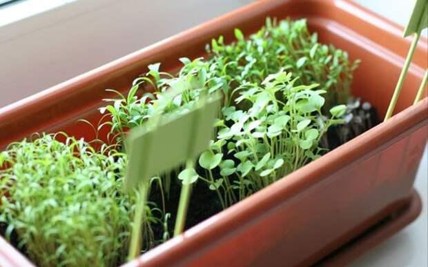 10симпатичных идей для тех, кто мечтает омини-огороде усебя накухне