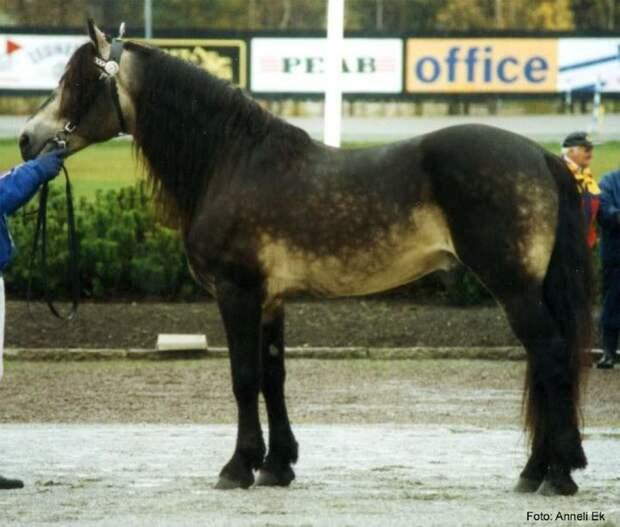 Рыжая с потемнением животные, лошадь