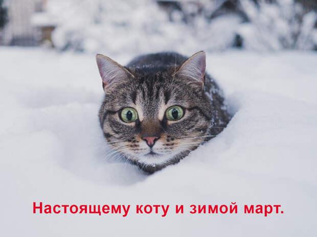 Коты в марте котируются! Немного мурлычного юмора))