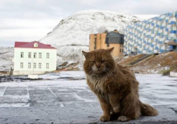 Джеймс Кот: почему единственный кот Шпицбергена скрывается под чужими документами