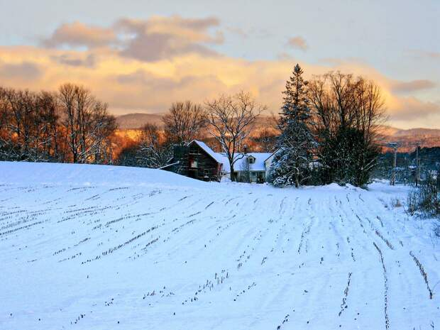 Озимые зерновые на полях Удмуртии надежно укрылись снежным покровом