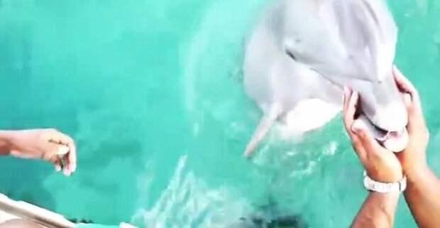 Дельфин вернул девушке потерянный в океане iPhone