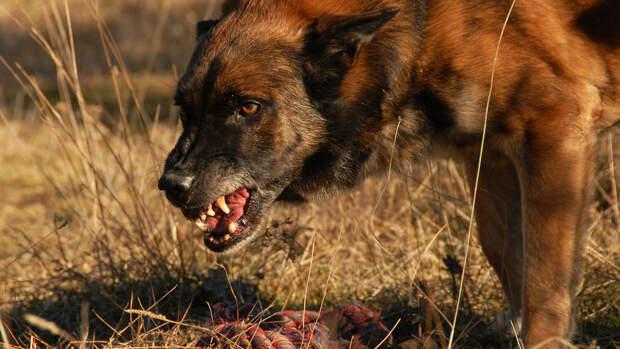 Собаки насмерть загрызли ребенка в Башкирии