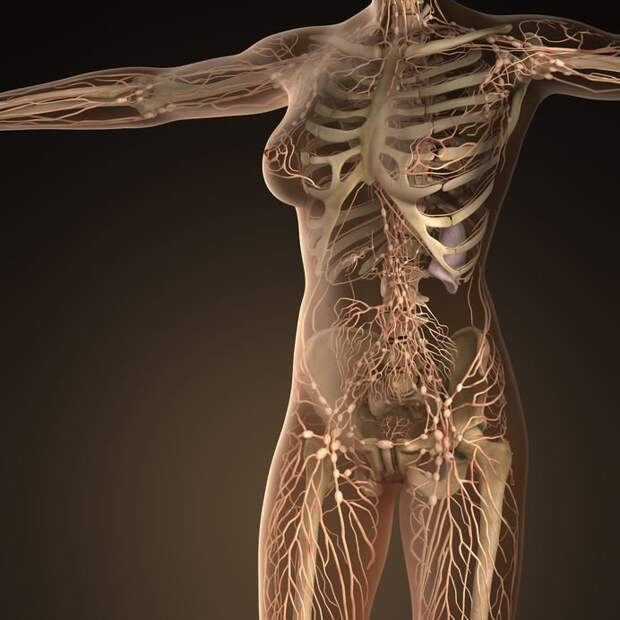 Как улучшить здоровье лимфосистемы: Топ-6 продуктов, чистящих лимфу