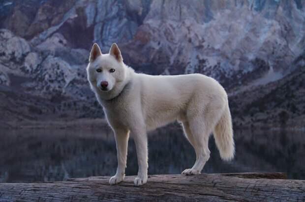 путешествие по США Джона Шторца и его собаки Вольфа (6)