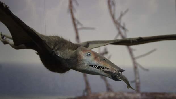 Шея летающих гигантских птерозавров оказалась значительно длиннее, чем у жирафов