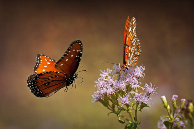 50 прекрасных фотографий бабочек