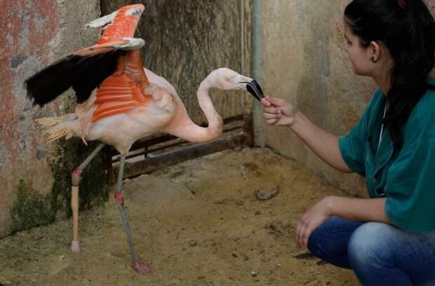 Фламинго с протезом 6