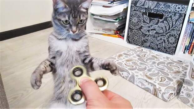 Забавные Коты и Собака руками поедака